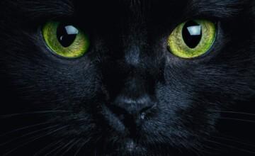 blog-wpis-dlaczego-moj-kot-nie-spi-w-nocy